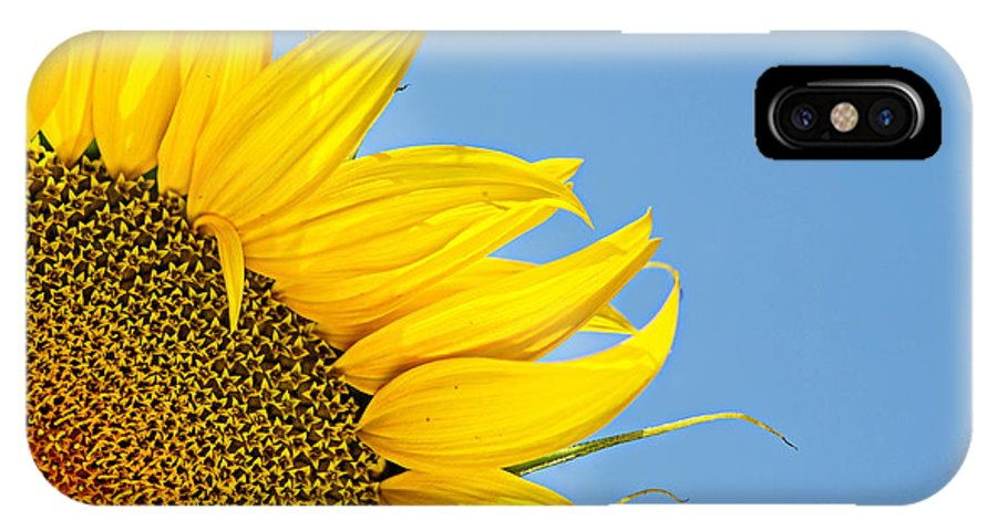 Sun IPhone X Case featuring the photograph Sunflower by Stela Taneva