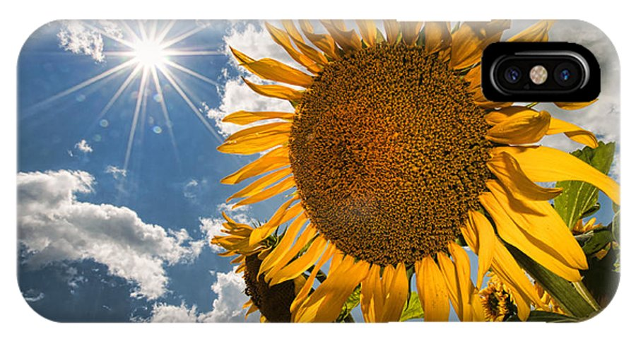 Flowers IPhone X Case featuring the photograph Sunflower Study 2 by Mitchell Brown