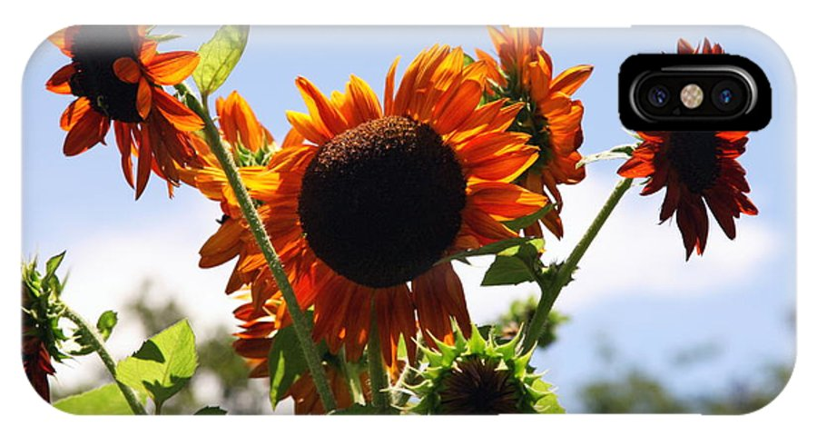Sunflowers IPhone X Case featuring the photograph Sunflower Symphony by Karen Wiles