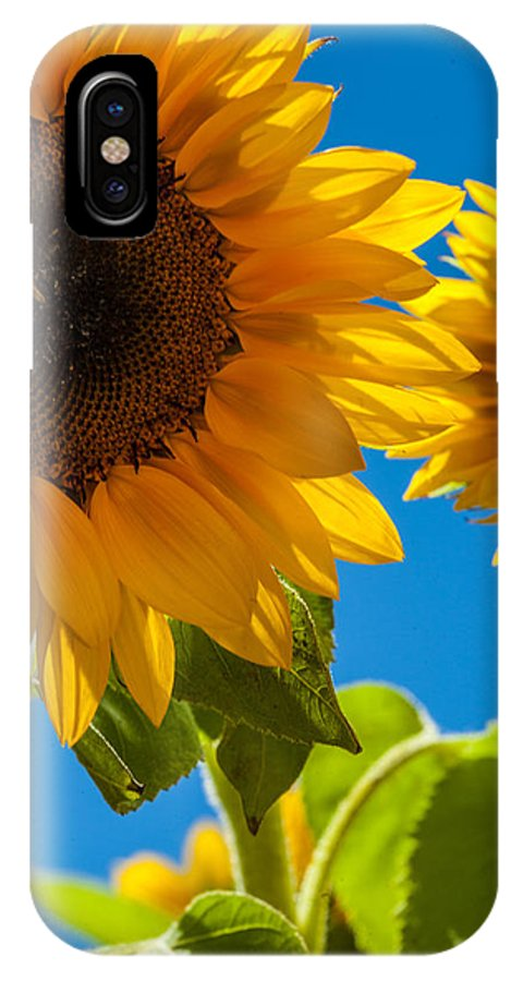Sunflowers IPhone X Case featuring the photograph Sunflowers 2 by Dasmin Niriella