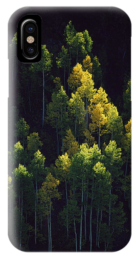 Color Image IPhone X / XS Case featuring the photograph Sunlight Highlights Aspen Trees by Melissa Farlow