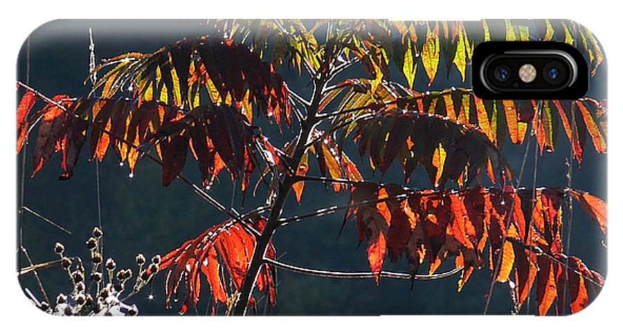Morning Light IPhone X Case featuring the photograph Sunlight Stars On Sumac by Natalie LaRocque