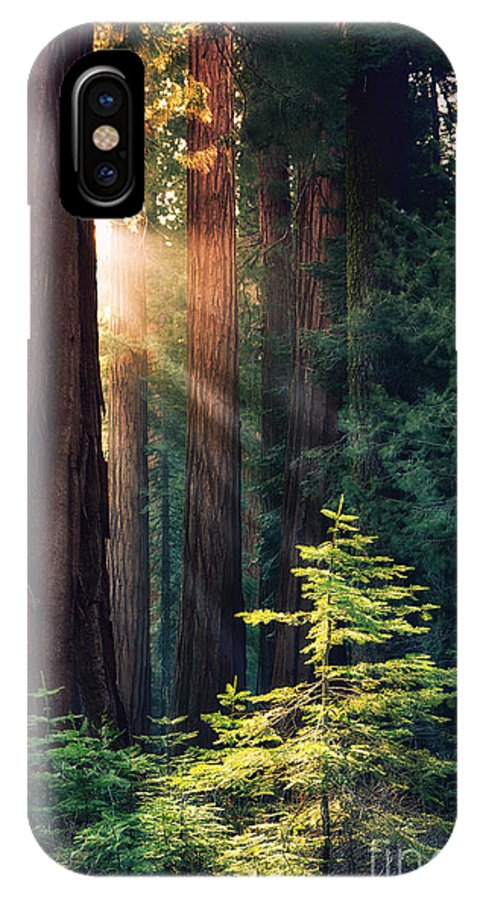 Redwood IPhone X Case featuring the photograph Sunlit From Heaven by Jane Rix