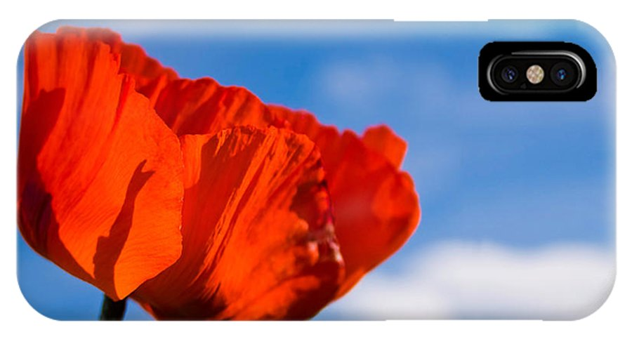 3scape Photos IPhone X Case featuring the photograph Sunlit Poppy by Adam Romanowicz