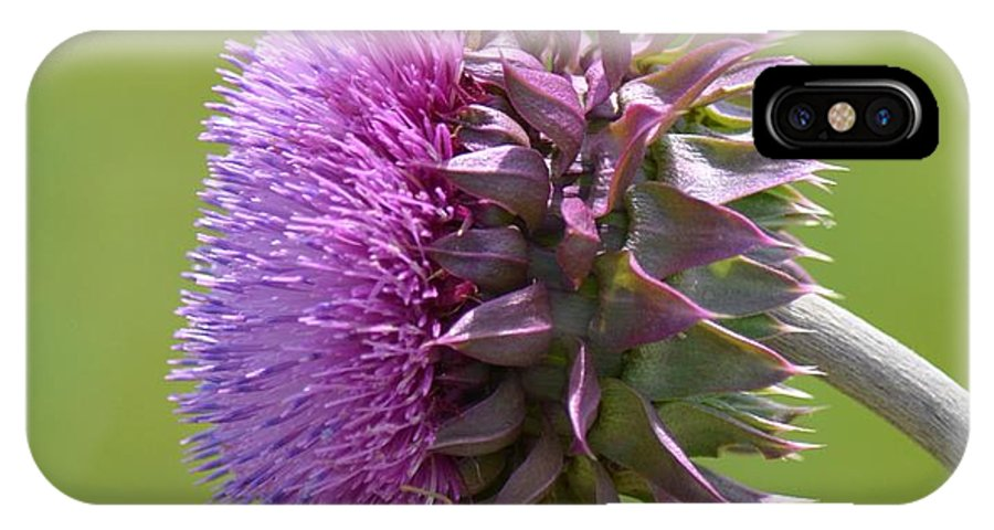 Sunlit Thistle IPhone X / XS Case featuring the photograph Sunlit Thistle by Maria Urso