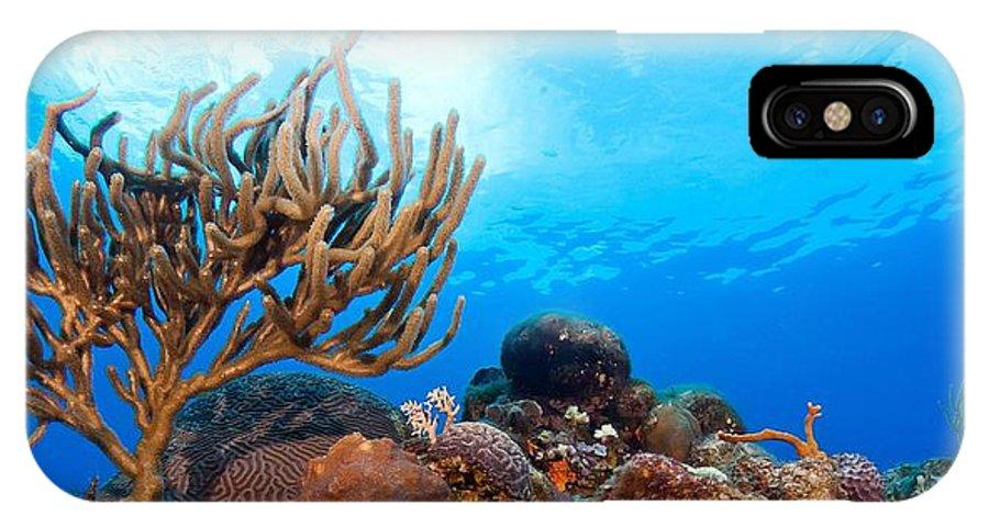 IPhone X Case featuring the photograph Sunny Cozumel II by Paula Marie deBaleau