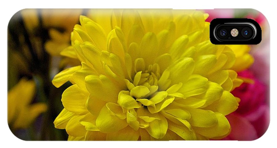 Yellow Mum Flower Print IPhone X Case featuring the photograph Sunny Flowers by Kristina Deane