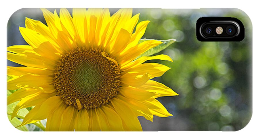 Sunflower IPhone X Case featuring the photograph Sunny Sunflower by Remy Gervais