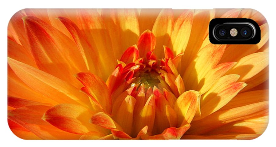 Dahlia IPhone X Case featuring the photograph Sunrise by Terri Waselchuk