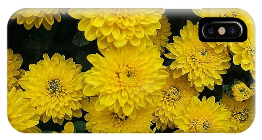 Floral IPhone X Case featuring the photograph Sunshine by Jo Dawkins
