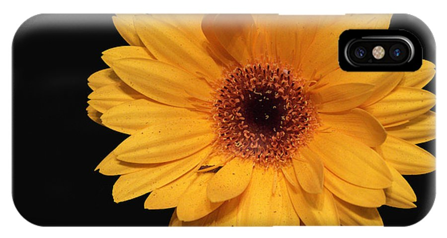 Nature IPhone X Case featuring the photograph Sunshine by Lisa Wagner