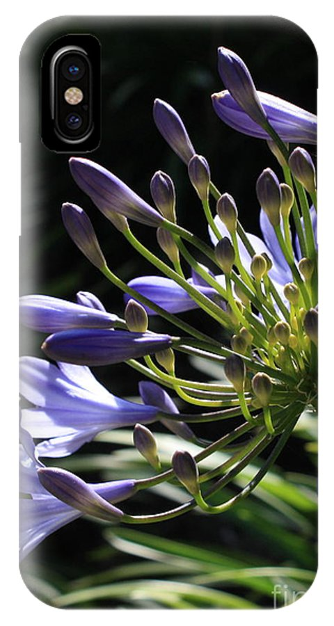 African Lily IPhone X Case featuring the photograph Sunshine On Agapanthus by Carol Groenen