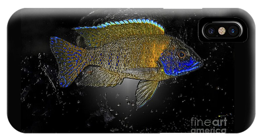 Sunshine Peacock Cichlid IPhone X Case featuring the photograph Sunshine Peacock 2 by Heather Gosnell