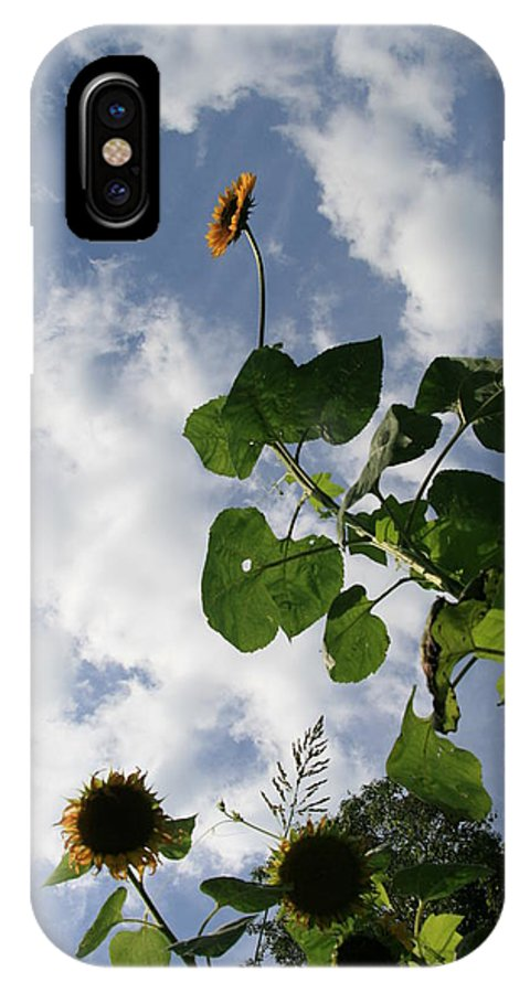 Sunflower IPhone X / XS Case featuring the photograph Super Sunflower by Neal Eslinger