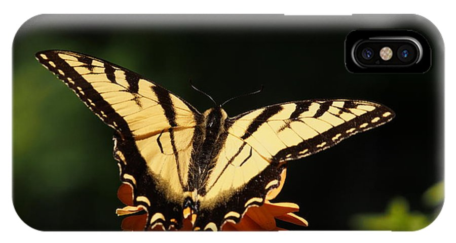 Flowers IPhone X / XS Case featuring the photograph Swallowtail Butterfly by Dorothy Lee