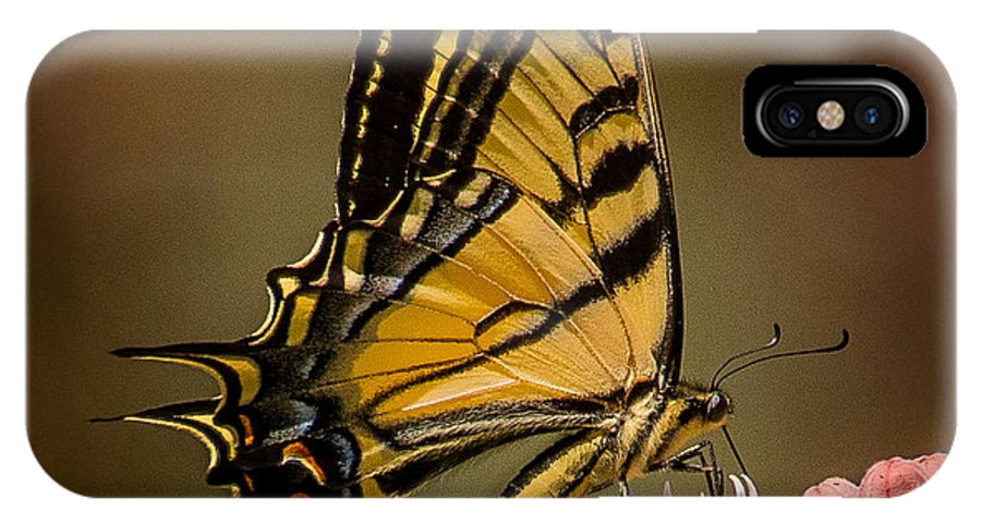 Butterfly IPhone X Case featuring the photograph Swallowtail On Milkweed by Janis Knight