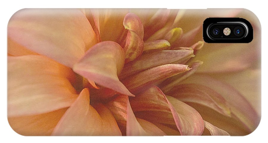 Dahlia IPhone X Case featuring the photograph Sweet As Honey by Cheryl Butler