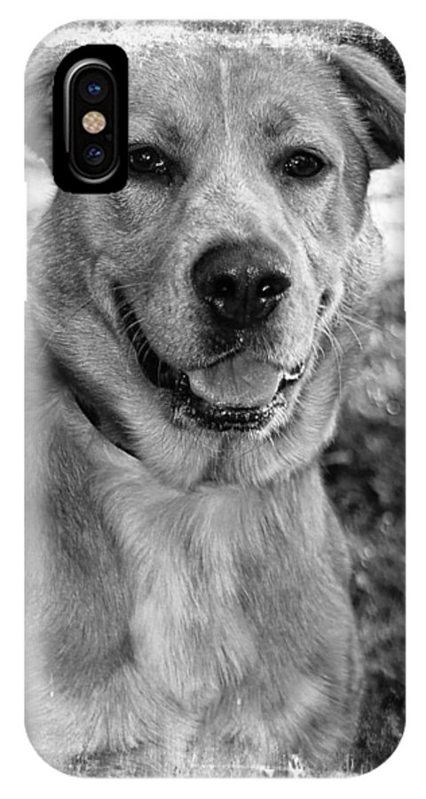 Dog IPhone X Case featuring the photograph Sweet Hound by Joyce Baldassarre