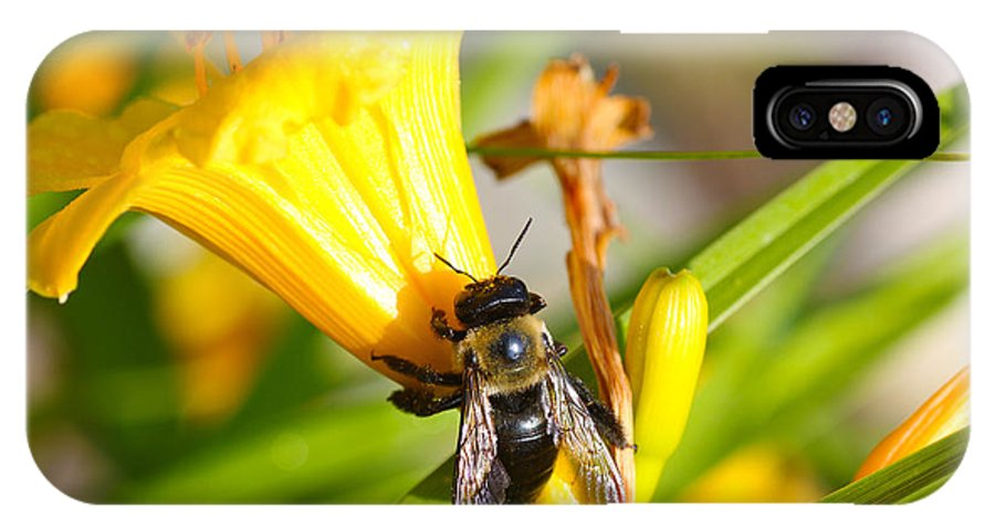 Bee IPhone X / XS Case featuring the photograph Sweet Nectar by Jerome Lynch