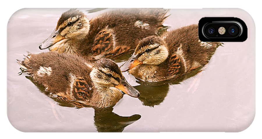 Ducklings IPhone X Case featuring the photograph Swimming Ducklings by Peggy Collins