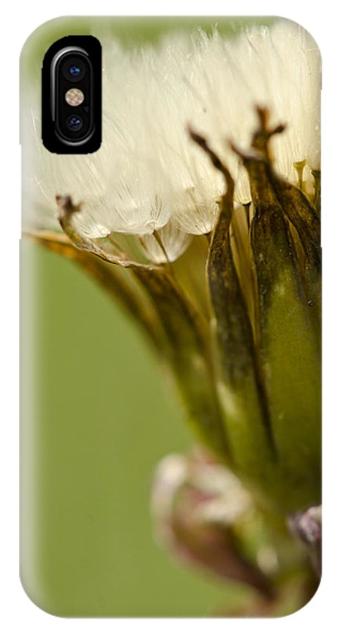 Dandelion IPhone X Case featuring the photograph Symmetry by Julie Wynn
