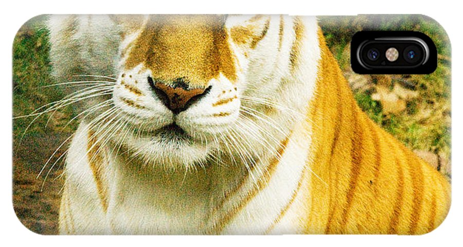 Tiger Photographs IPhone X Case featuring the photograph Tabby Tiger I by Vernis Maxwell