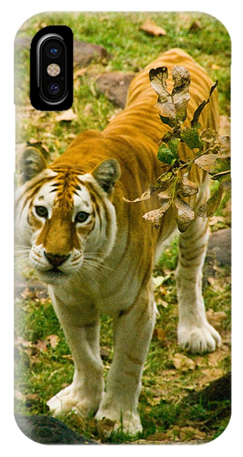 Tiger Photographs IPhone X Case featuring the photograph Tabby Tiger IIi by Vernis Maxwell