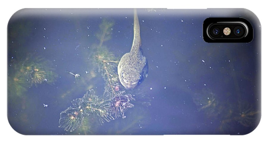 Bullfrog IPhone X Case featuring the photograph Tadpole by Elaine Mikkelstrup