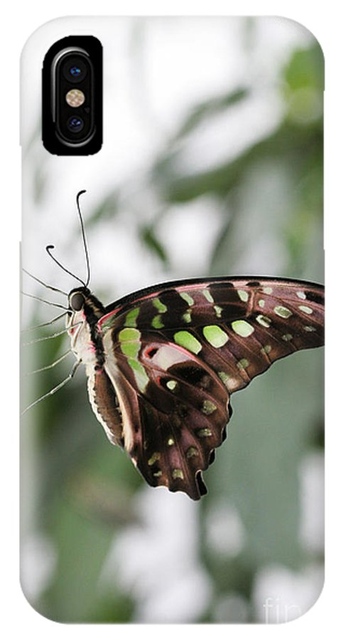 Butterfly IPhone X Case featuring the photograph Tailed Jay Butterfly by Judy Whitton