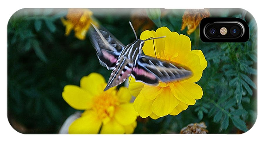 Butterfly Moth IPhone X Case featuring the photograph Taking Flight by Susan Herber