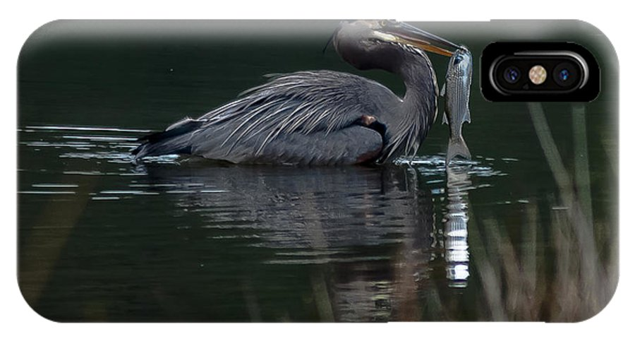 Great Blue Heron IPhone X Case featuring the photograph Taking Home A Mullet by Charles Moore