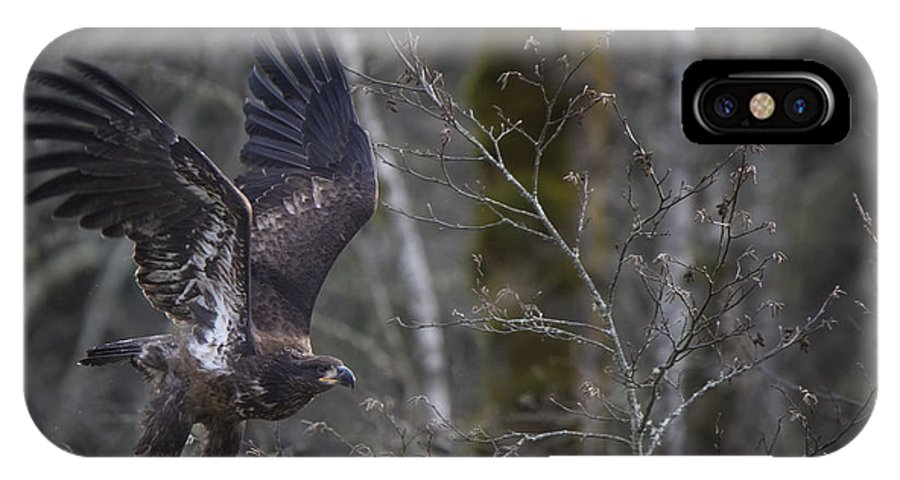 Young Eagle IPhone X Case featuring the photograph Taking Off by Quynh Ton