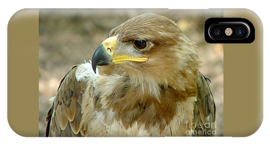 Eagle IPhone X Case featuring the photograph Tawny Eagle-11 by Gary Gingrich Galleries