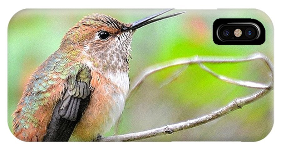 Humming Bird IPhone X Case featuring the photograph Talking Hummer by Vivian Sampson
