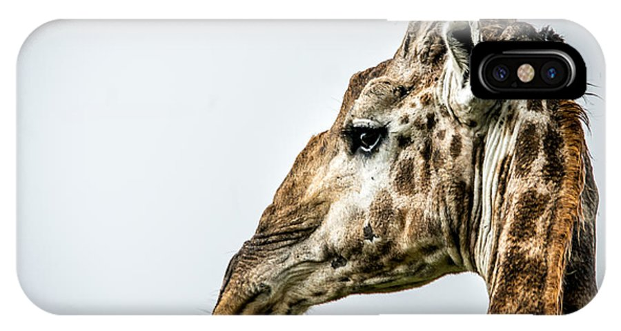 Giraffe IPhone X Case featuring the photograph Tall And Vigilant by Andrew Matwijec