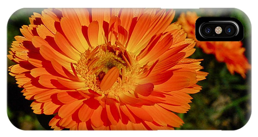 Photography By Tiwago IPhone X Case featuring the photograph Tangerine Calendula by Photography by Tiwago