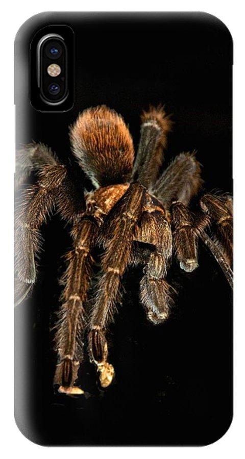 Tarantula IPhone X Case featuring the photograph Tarantula Love by Berta Keeney