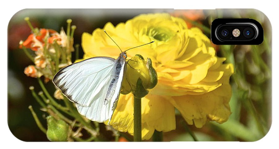 Butterfly IPhone X Case featuring the photograph Taste Of Spring by Carol Bradley
