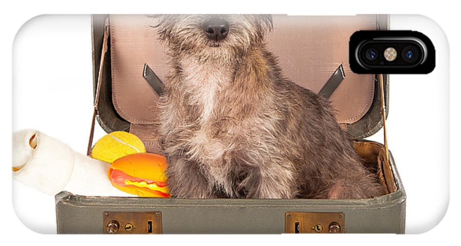 Dog IPhone X Case featuring the photograph Terrier Dog In Suitcase by Susan Schmitz