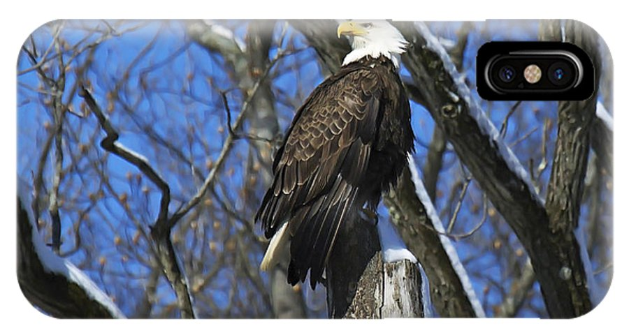 Bald Eagle IPhone X Case featuring the photograph That Look by Rob Hawker