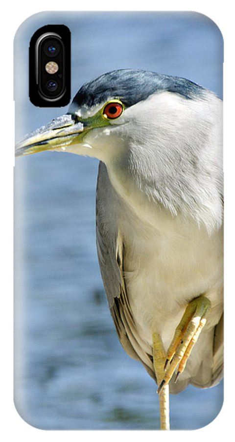 Green-crowned Heron IPhone X Case featuring the photograph The Balancing Act by Saija Lehtonen