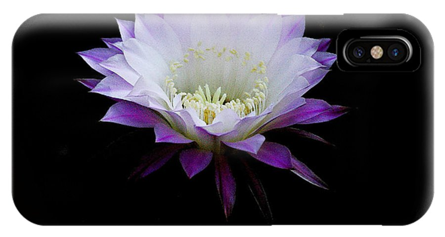 Cereus IPhone X Case featuring the photograph The Belle Of The Ball by Ruth Jolly