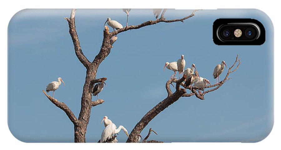 Bird IPhone X Case featuring the photograph The Bird Tree by John M Bailey