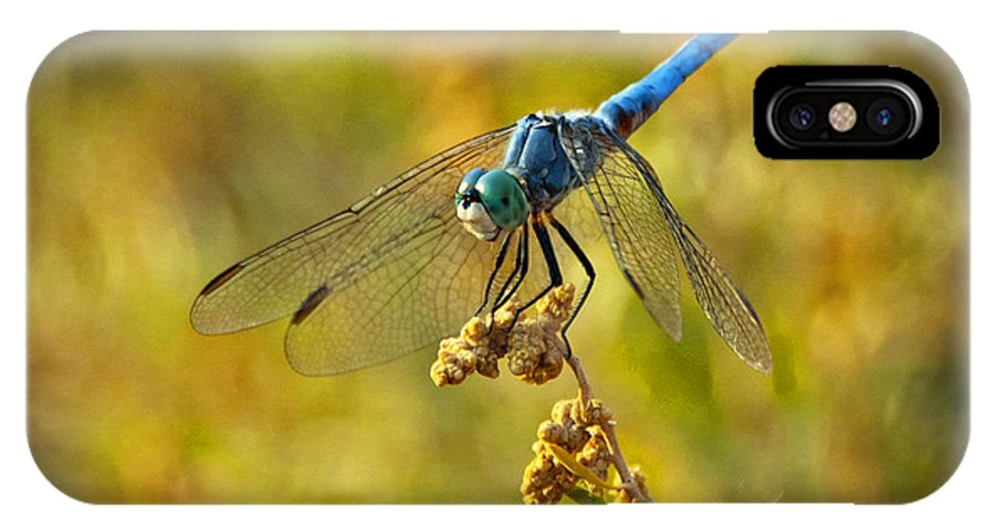 Blue Dragonfly IPhone X Case featuring the photograph The Blue Dragonfly by Saija Lehtonen