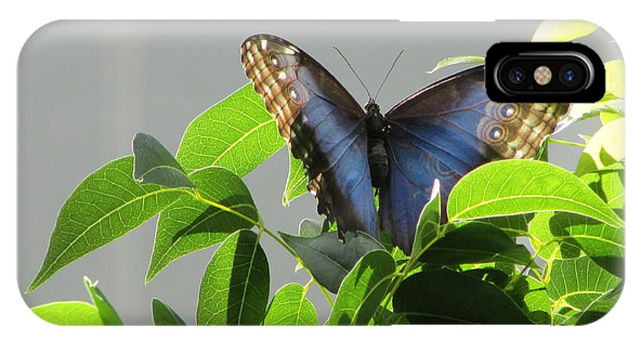 Butterfly IPhone X Case featuring the photograph The Butterfly Displaying Its Beauty by Beatriz Perez