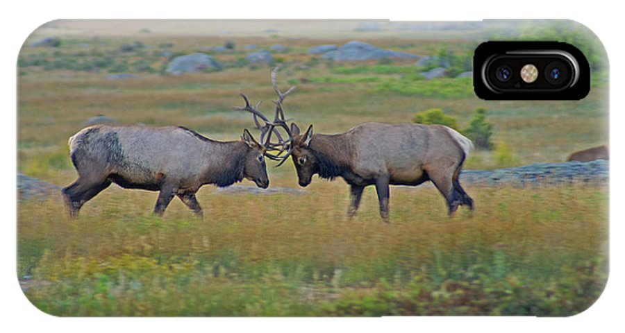 Elk IPhone X / XS Case featuring the photograph The Challenge by Kelly Black