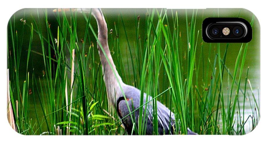 Crane Cranes Wild Bird Birds Rlclough IPhone X Case featuring the photograph The Crane 2010. No.2 by RL Clough