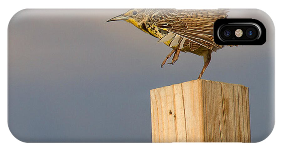 Meadowlark IPhone X Case featuring the photograph The Crane Kick by Jim Garrison