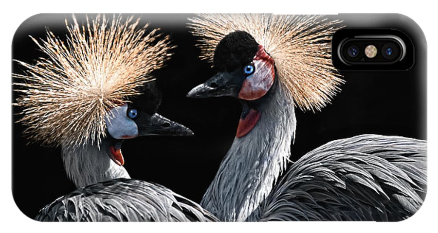 Animals IPhone X Case featuring the photograph The Crowned Cranes by Joachim G Pinkawa