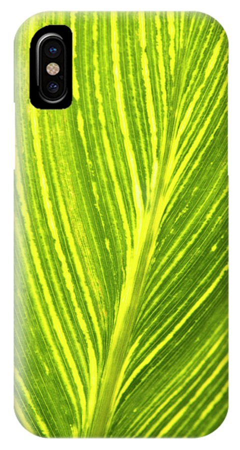 Beauty In Nature IPhone X Case featuring the photograph The Detail Of Plant Leaf, Salt Lake by Whit Richardson